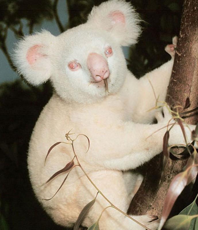 Фотографии  животных-альбиносов
