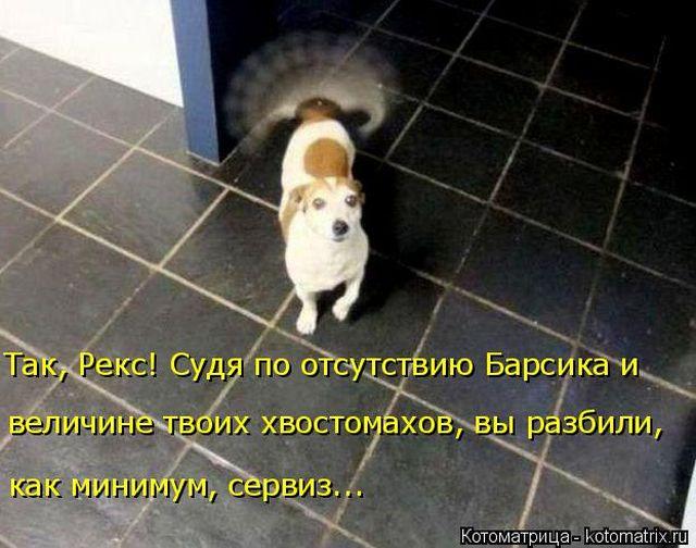 Сборник лучших приколов про котов