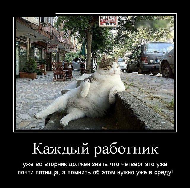 Свежий сборник самых смешных демотиваторов