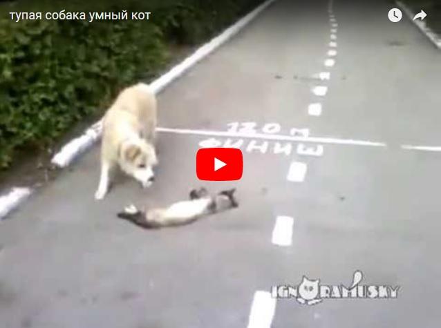 Тупая собака против умного кота