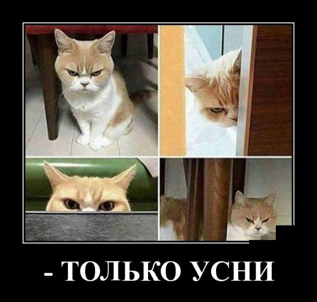Про понедельник, нормального кота и одиночество - лучшие демотиваторы