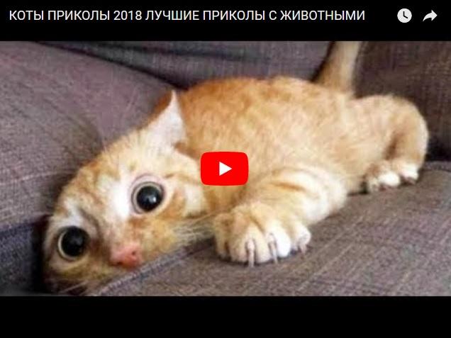 Свежая подборка видео приколов с животными