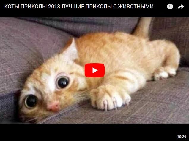Котоприколы 2018. Лучшие приколы с животными