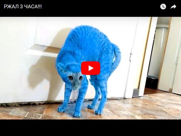 Ржал три часа - кошачьи видеоприколы