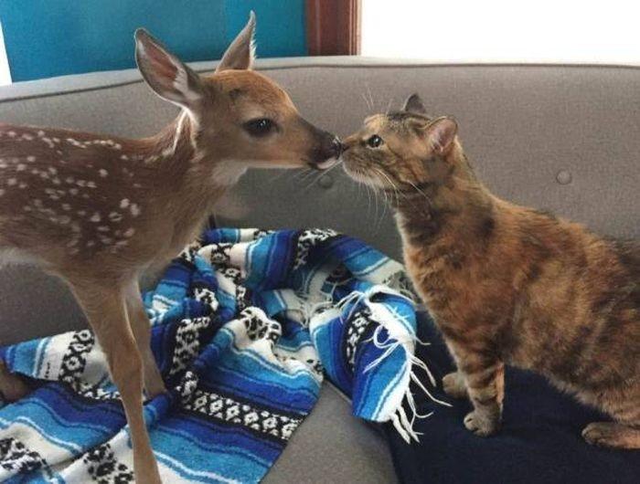 Милые животные - фото без комментариев