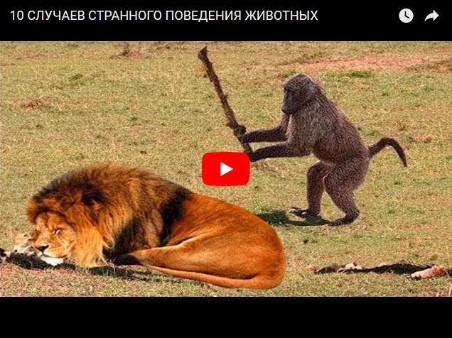 Подборка случаев странного поведения животных