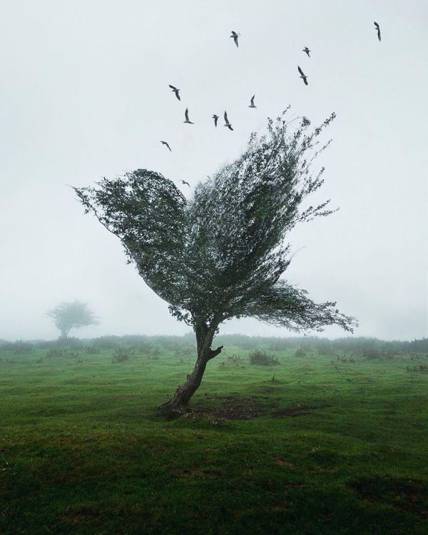 Торжество сюрреализма при помощи фотошопа