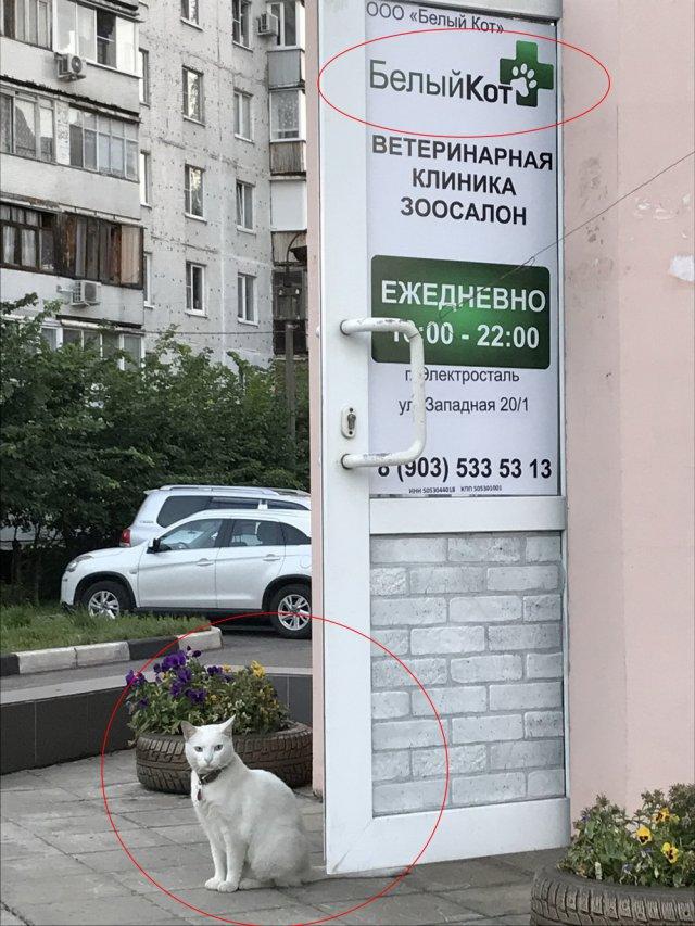 Тем временем в России - подборка русских приколов