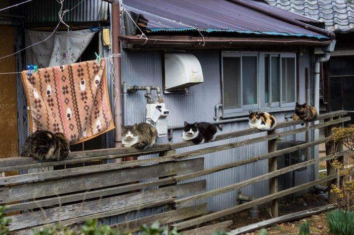 Ох уж эти забавные животные - прикольные фото