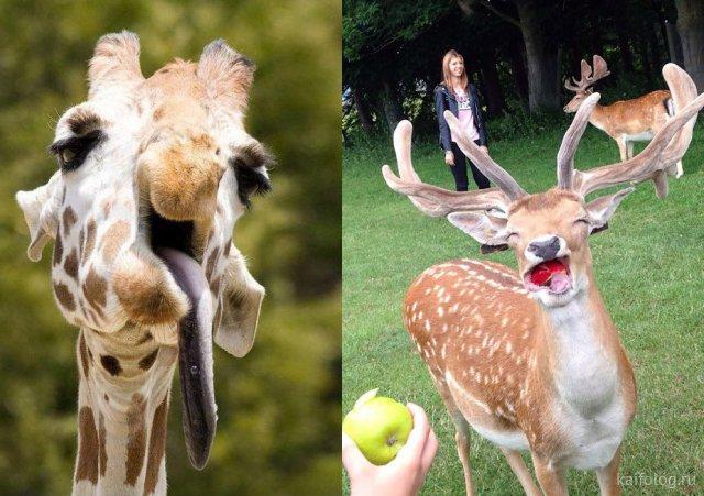 Самые милые и смешные животные