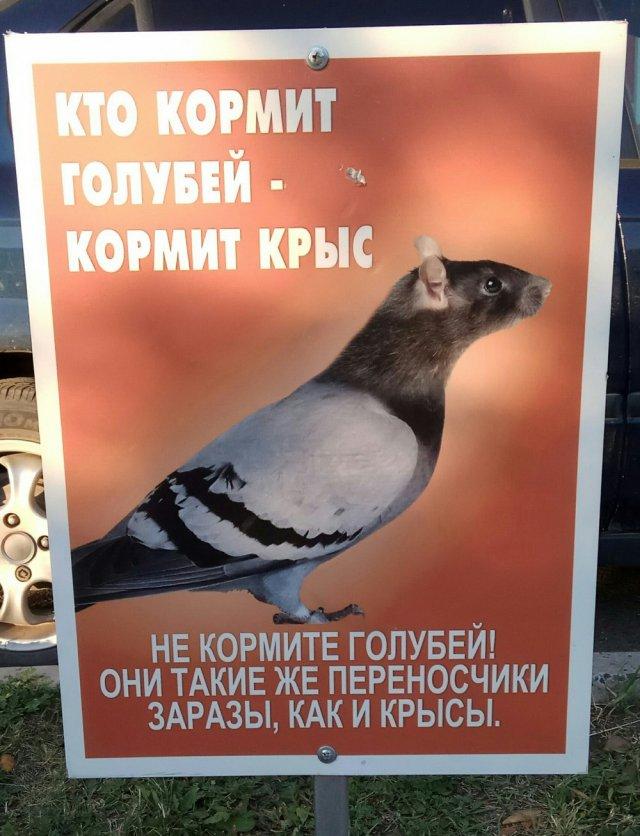 Приколы про голубей