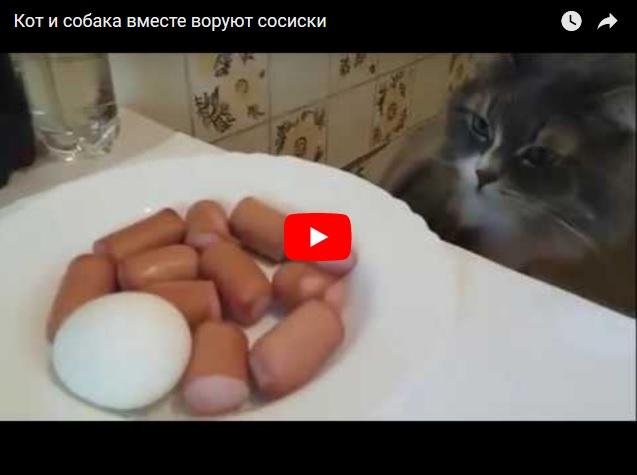 Кот и собака вместе воруют сосиски