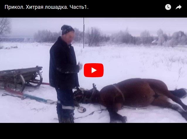 Хитрая лошадь, которая притворилась мертвой