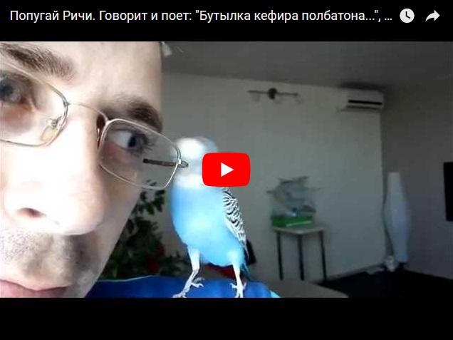 Я уеду жить в Лондон - прикольный попугай поет песни