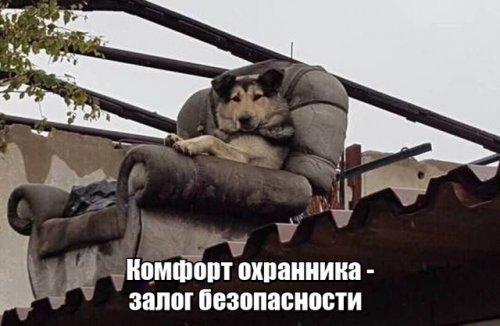Свежий сборник прикольных картинок на воскресенье