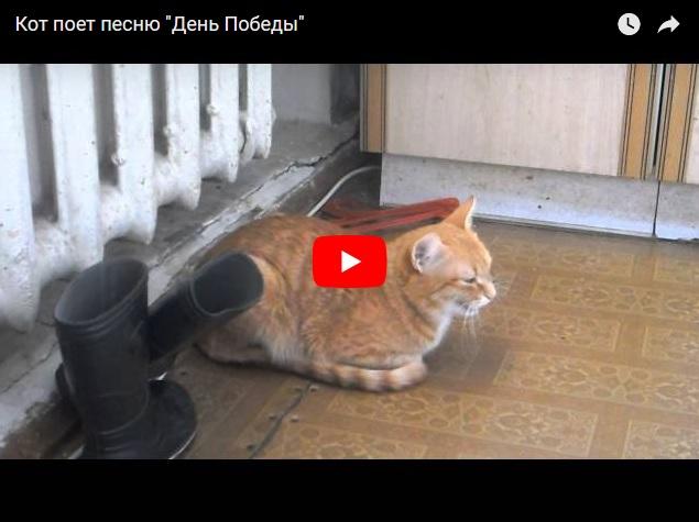 """Кот поет песню """"День Победы"""" - прикольное видео"""