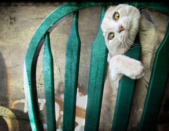Неожиданные ситуации - кошачьи приколы