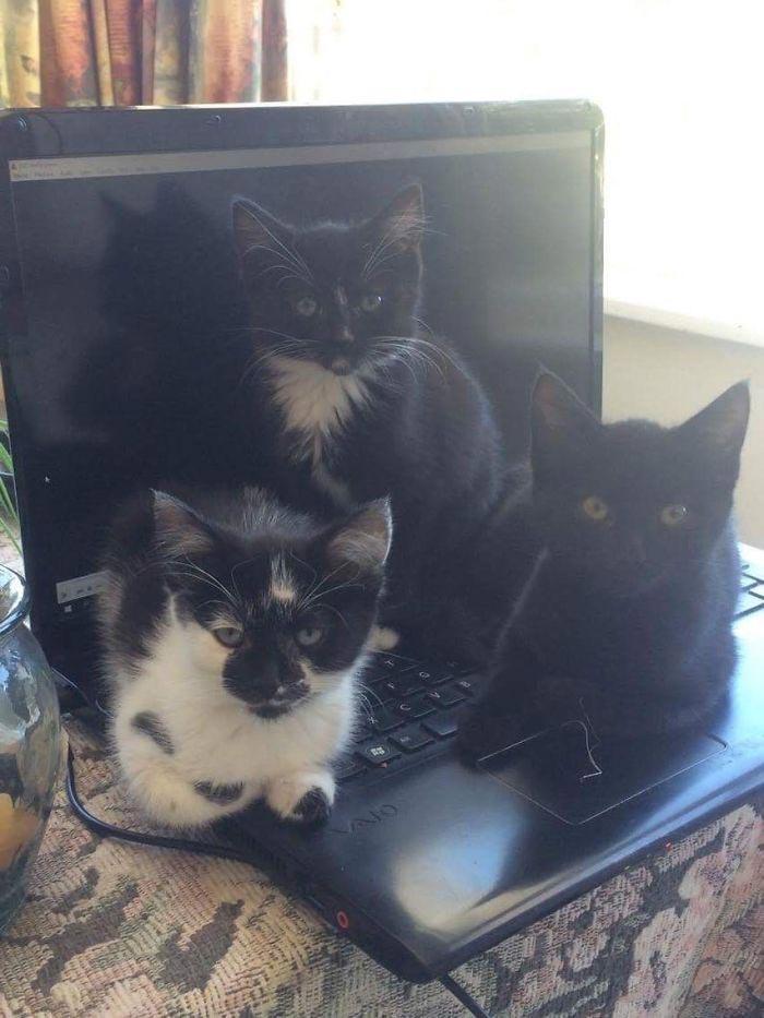 Про шкодных кошек и котов