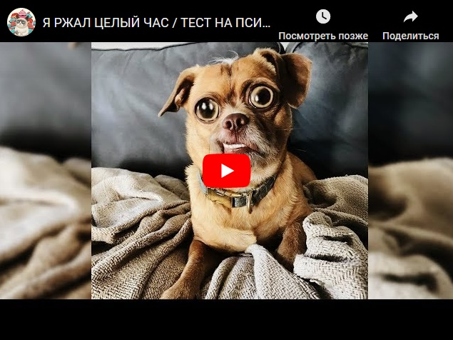 Тест на психику - самые смешные животные