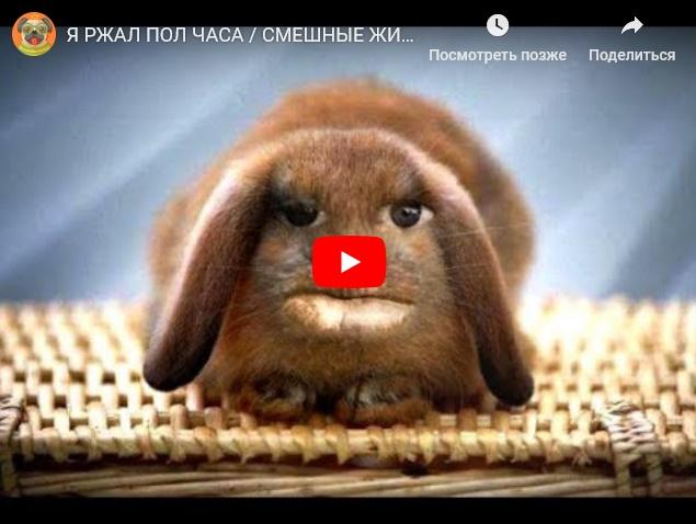 Коты, собаки и прочие смешные животные - подборка прикольного видео