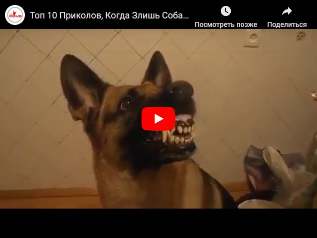Видео про идиотов, которые злят собак