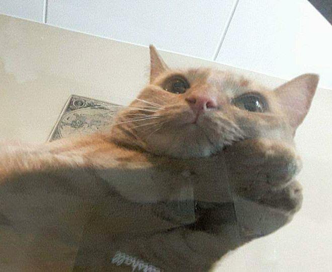 Коты на стекле