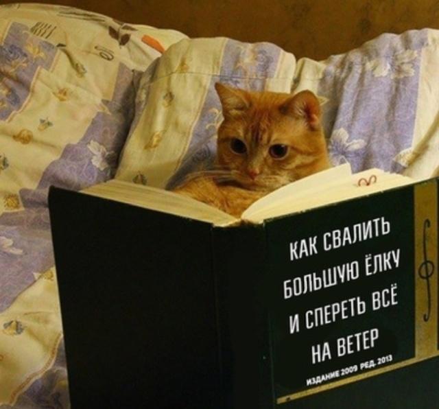 Свежий сборник фотоприколов на понедельник