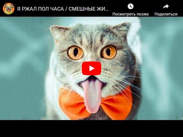 Смешные животные - коты, собаки и другие...