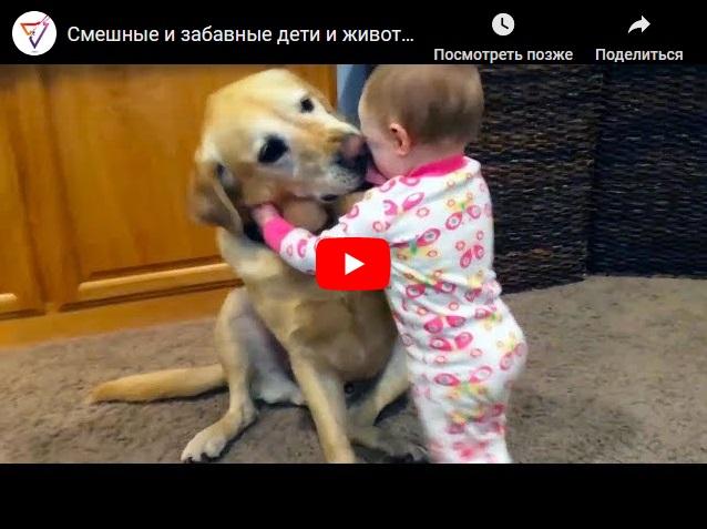 Смешные и забавные дети и животные - прикольное видео