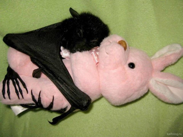 Самые смешные фотографии животных