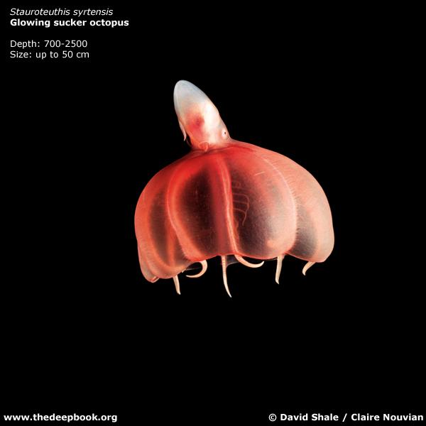 Жуткие глубоководные существа, живущие в океане