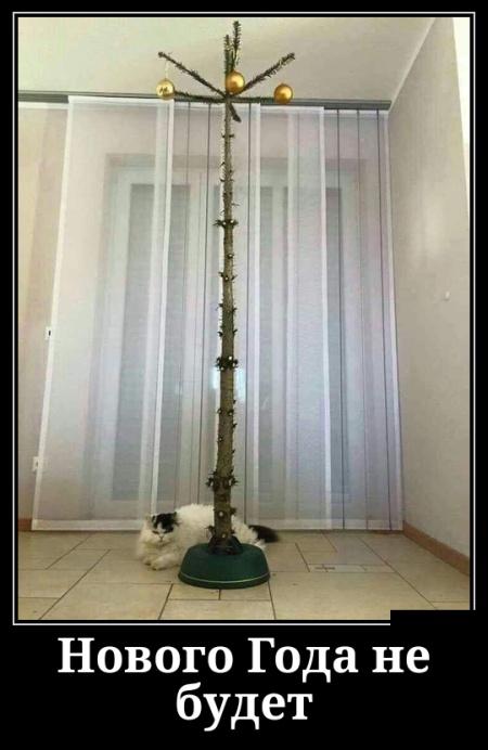 Про кошачьи мысли, риск и обиду - подборка свежих демотиваторов
