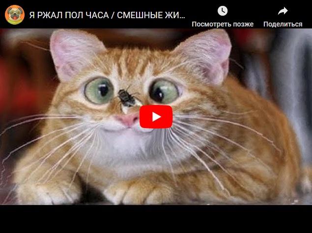 Смешные животные - приколы про котов, собак и других братьев наших меньших...
