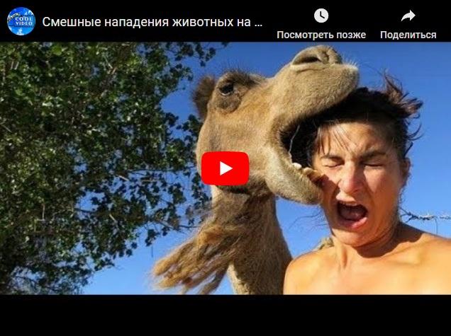 Самые смешные нападения животных на людей