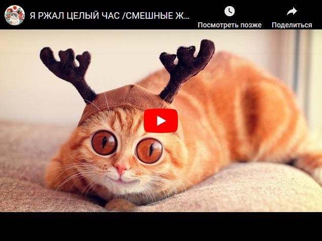Улетные видео приколы про животных