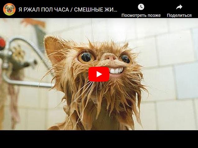 7 минут смеха - самые прикольные животные