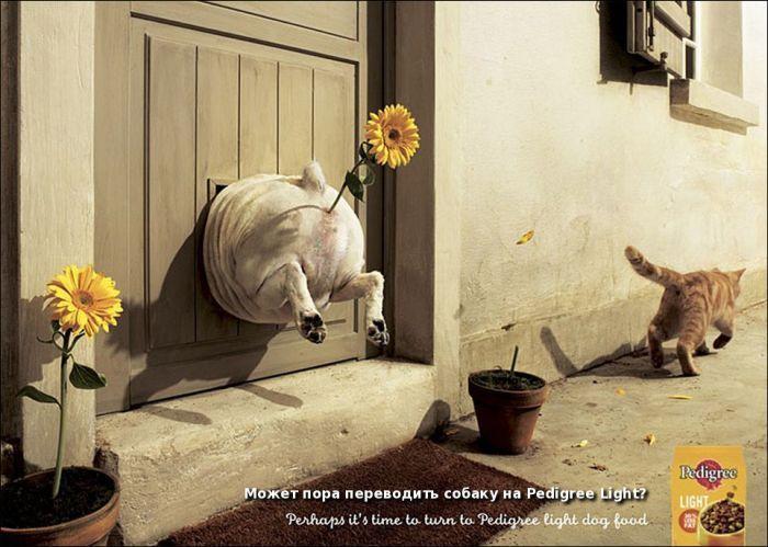 Самая прикольная реклама - подборка улетного креатива