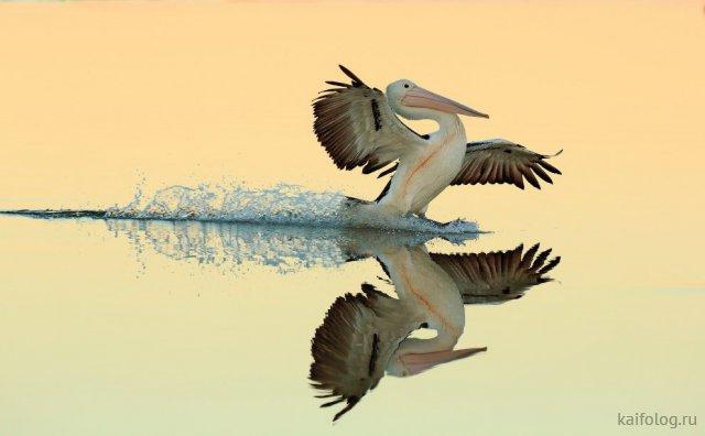 Красивые фото птиц