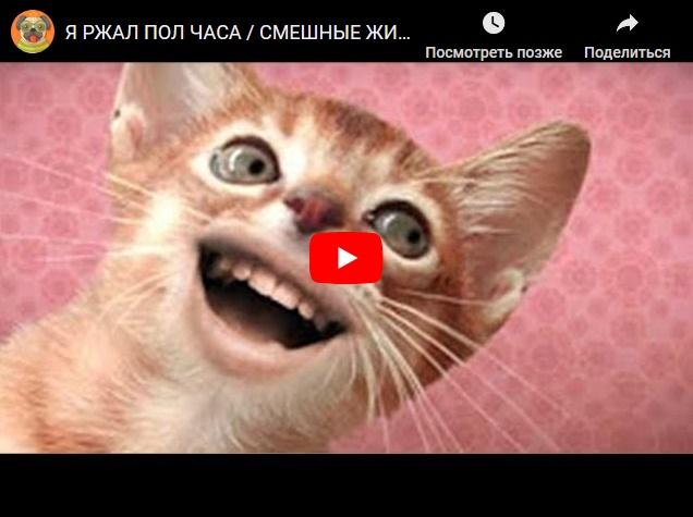 Смешные видео с котами , собаками и другими животными - про братьев меньших
