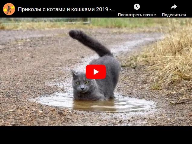 Приколы с котами и кошками 2019