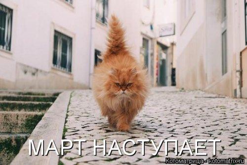 Свежая котоматрица на четверг