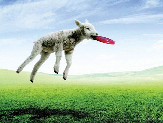 Самые креативные приколы про животных