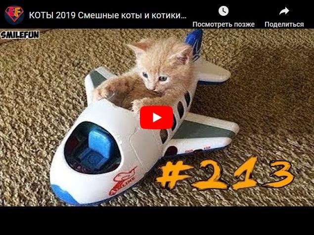 Смешные коты и котики, кошачьи приколы до слез
