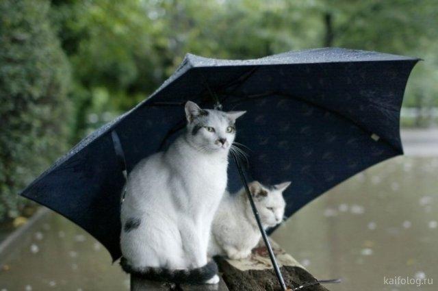 Есть и в дожде позитив... Прикольные картинки
