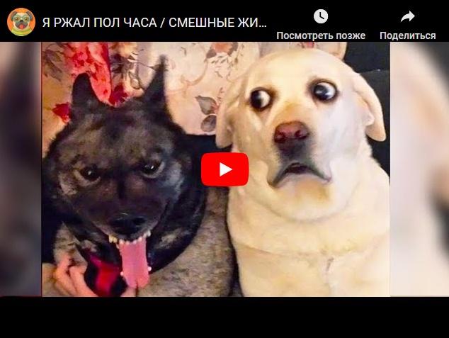 Смешные видео с прикольными животными