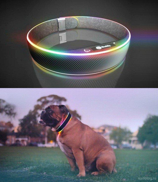 Самые прикольные изобретения для собак