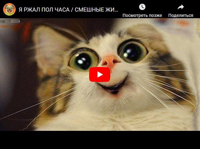 Смешные видео с котами , собаками - приколы про животных