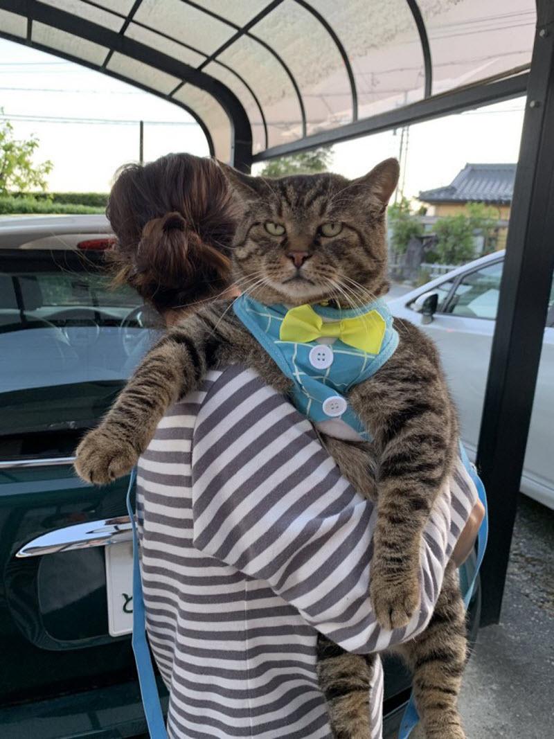 лучшие прикольные картинки с котами появляются новые модели