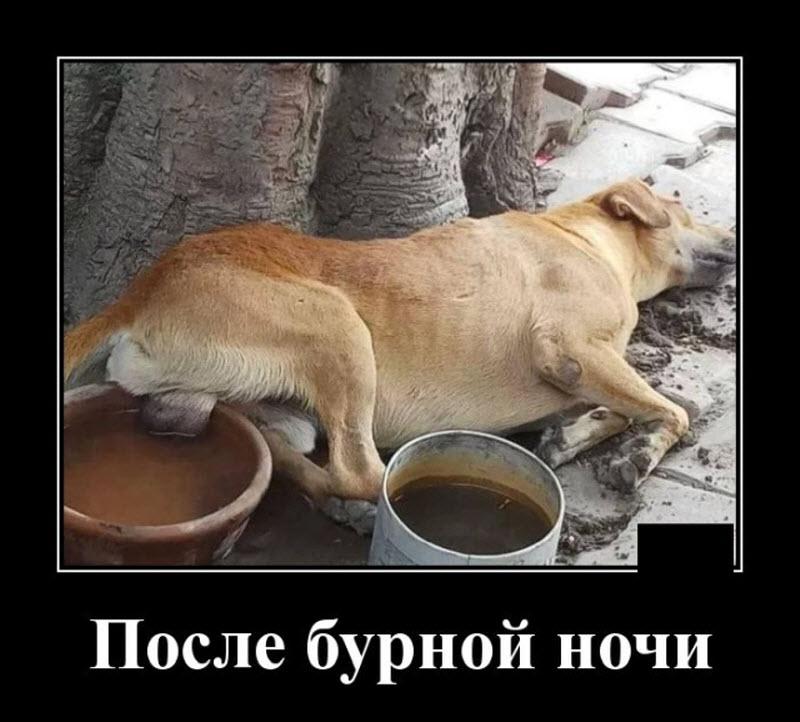 Про жару смешные картинки, истории россии смешные